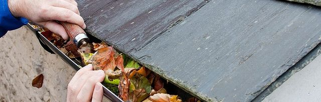 Leaf cleaning service