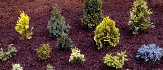 Landscaping Supplies | Peat Moss | Fairview, NJ
