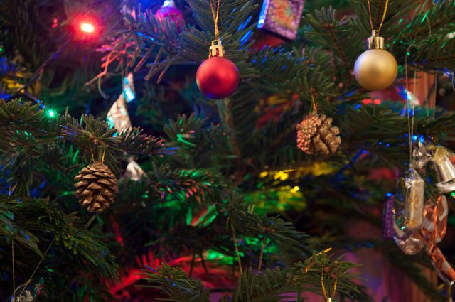 How To Keep Cats Off Christmas Trees.5 Ways To Keep Your Cat Out Of Your Christmas Tree