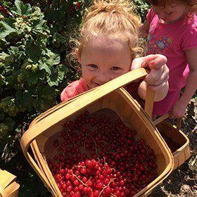 Fruits picking