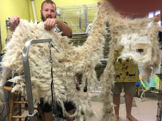 Dog pelt grooming