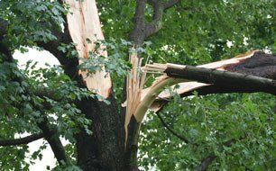Storm-damage tree