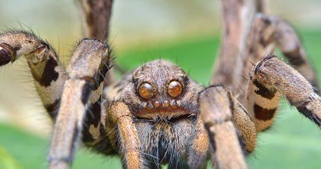Close up image of a spider