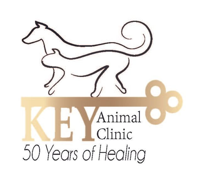 Key Animal Clinic Pet Care Lubbock Tx