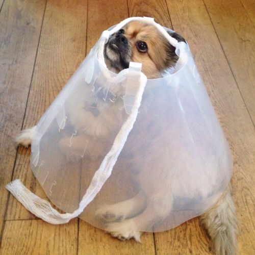 dog after neuter care instructions
