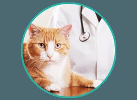 Quality Veterinary Service