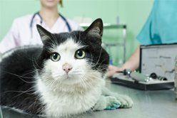 Cat hospital