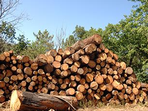 Dry Firewood Sales
