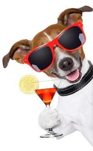 Dog with drink