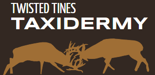 Twisted Tines Taxidermy | Taxidermy Studio | Galesville, WI