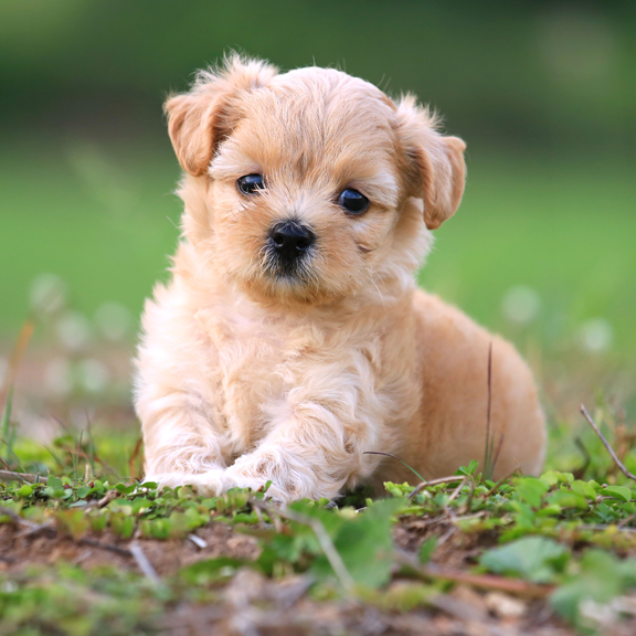 Pik A Pup Kennel Puppy Specialists Holliston Ma