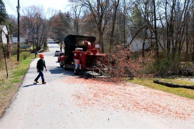 Tree service crew