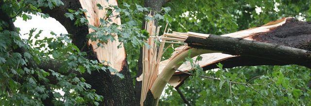 tree broke during storm