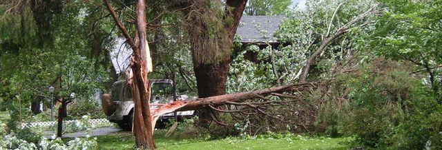 tree fallen over
