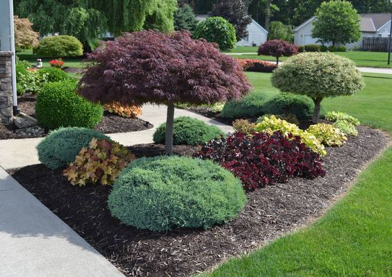 Using Japanese Maple In A Landscape Design