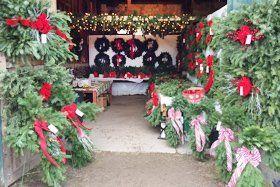 cut down Christmas trees