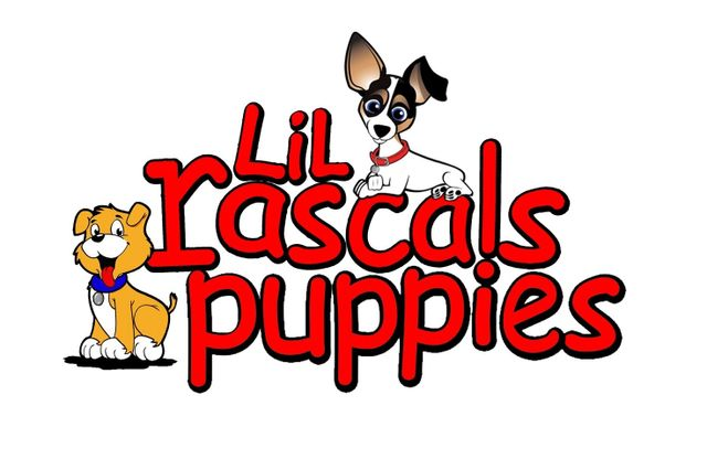 Lil Rascals | Pet Store | Fort Myers, FL