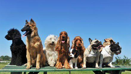 Leslies pet purrfections inc dog grooming round rock dog daycare solutioingenieria Images
