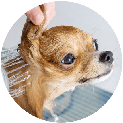 Dog grooming dog grooming services charlotte mi 517 997 3050 solutioingenieria Image collections