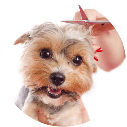 Dog grooming dog grooming services charlotte mi 517 997 3050 not only are their prices reasonable but its a calming atmosphere for my dog solutioingenieria Image collections