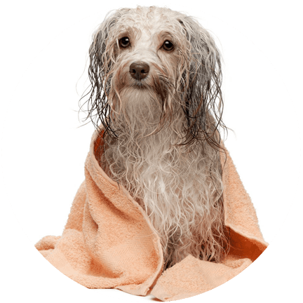 The groomery dog grooming cat grooming charlotte mi gentle pet grooming for your furry friends solutioingenieria Image collections