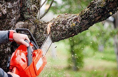Image result for Tree Trimming