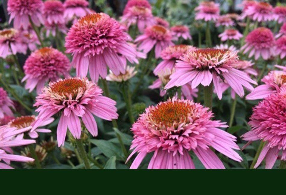 Plants Ann Arbor Mi Abbott S Landscape Nursery