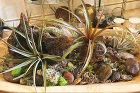 Plant arrangement with dish garden