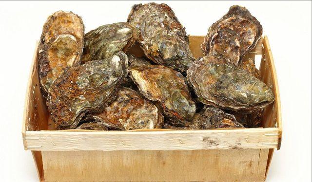 Wholesale Seafood   Fish and Shellfish   Houston, TX