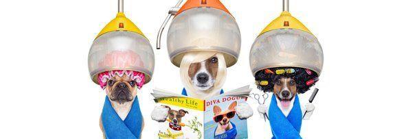 Pet Grooming | Pet Training | Hewlett, NY