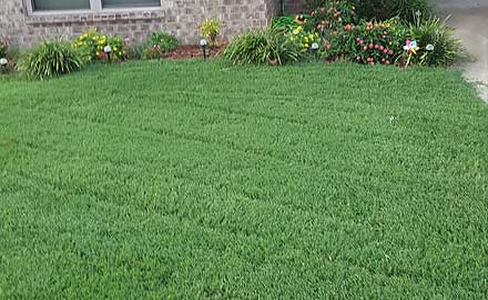 Image result for The Best Lawn Service Arkansas Offers