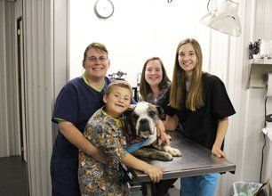 dog taking care by the veterinarian