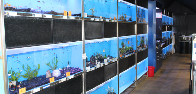 Freshwater And Saltwater Fishes Fish Tanks Kahului Hi