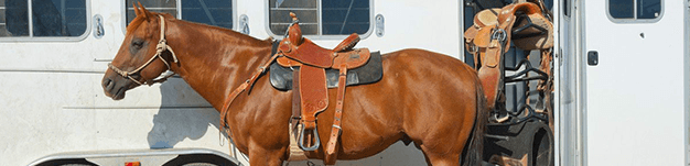 Horse motel