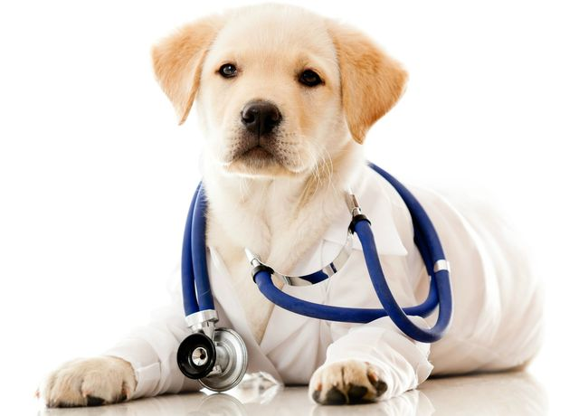 About Baldy View Animal Hospital | La Verne, CA Veterinarian