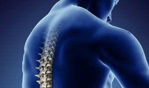 Back Bone