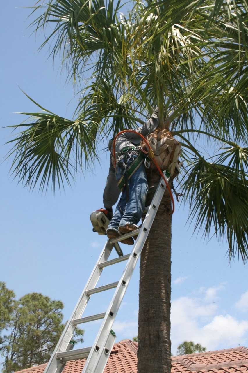 Residential Amp Commercial Tree Care Services Naples Fl