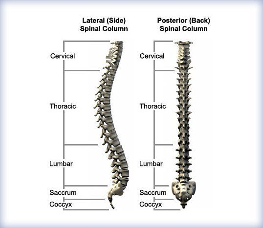Basic Back Anatomy | Spinal Anatomy | Dodge City, KS