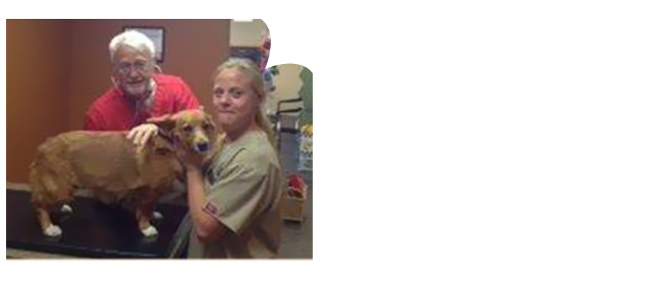 All Pets Veterinary Clinic Veterinary Care Cedar Rapids Ia