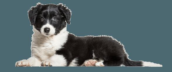 Large Dog Breeds Extra Large Dog Breeds Middletown Nj