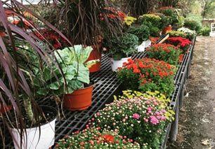Class Grass Garden Center | Granby, MA