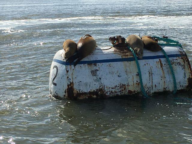 Sea Lions | Seals | Coastal Area