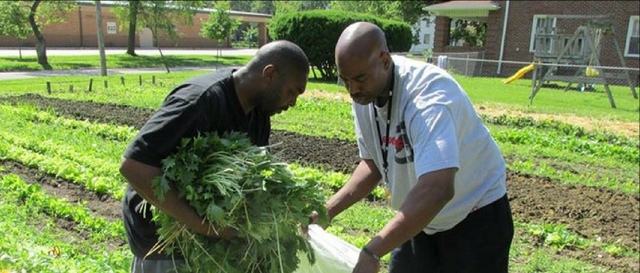 Economic Development Through Inner City Farming