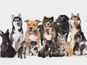 Learn More About All Breeds Welcome