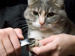 Learn More About Pet Grooming