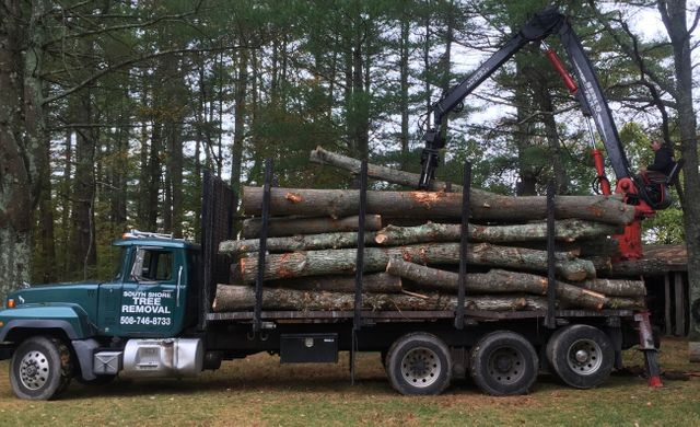Three Log Load ~ Firewood logs for sale marshfield plymouth ma south