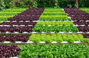 Appleseed Horticulture | Garden Consultation Placerville CA