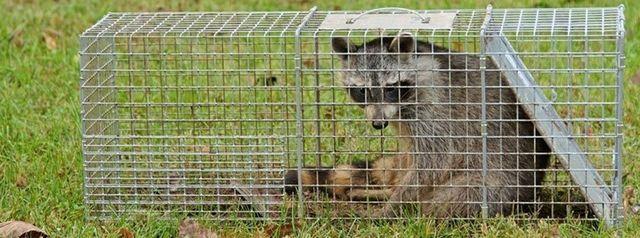Wildlife Control | Wildlife Removal | Milford, MI