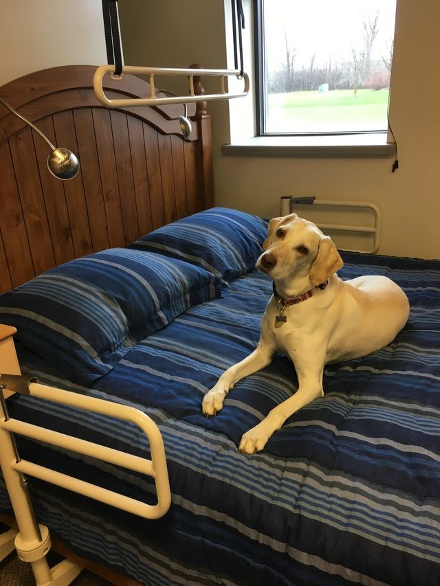 Bed Transfer Dog