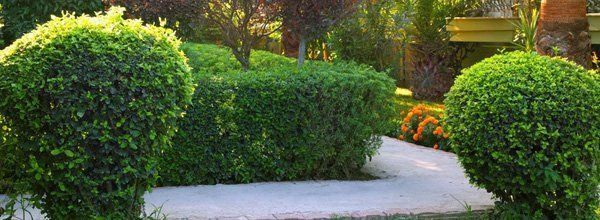 Shrubbery Shrubbery Removal Mesquite Tx
